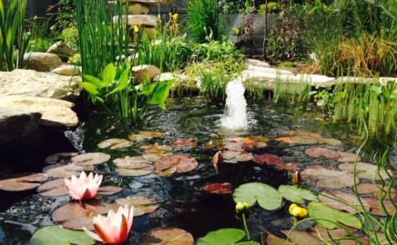 Our Beautiful Pond!